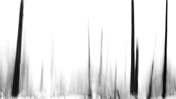 Fog_and_trees_equivelent_iv