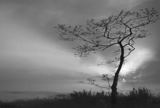 Trees_no__10