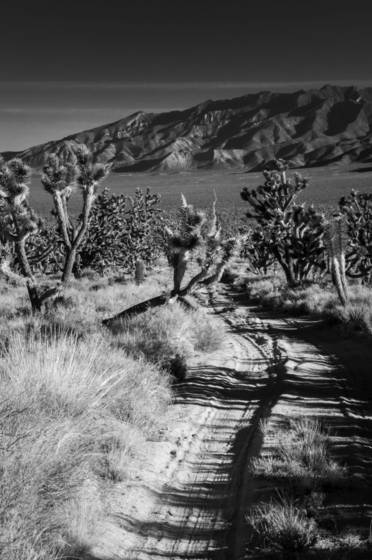 Joshua tree national forest 3