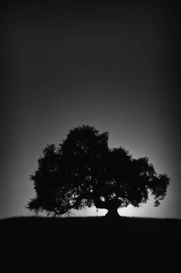 Lone_oak