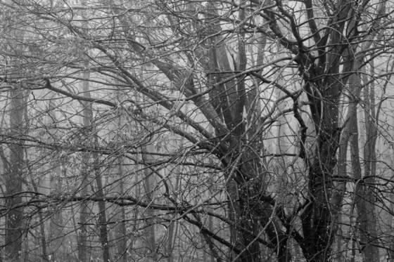 Tree_in_fog