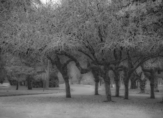 Marymoor_park