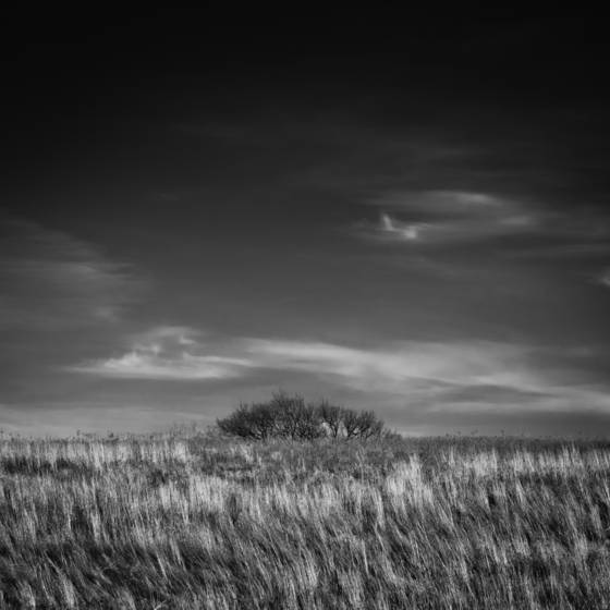 2_grass