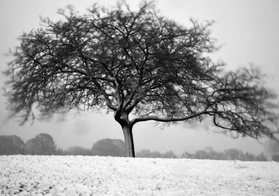 Tree in a winter storm