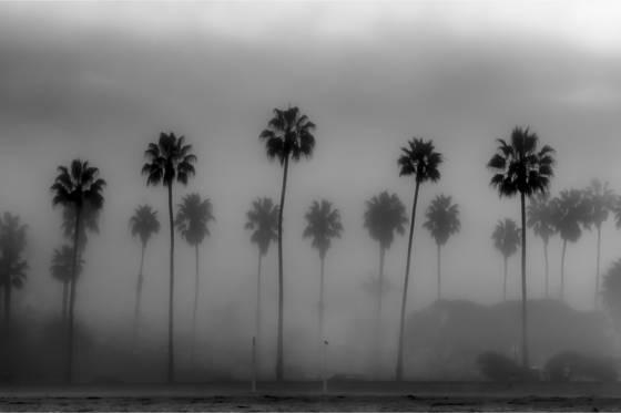 Fog__2