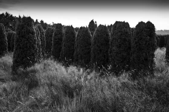 Warrior_trees_10