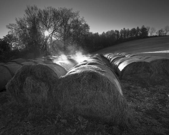 First light and hay bales