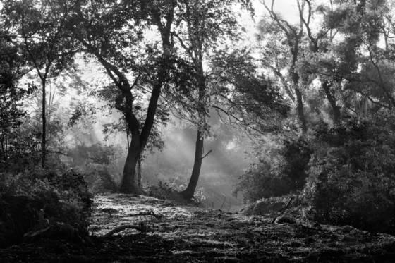 Deep_forest