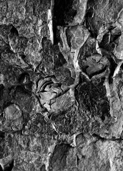 Fossils_in_cliff