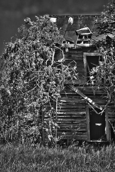 Wisteria_house