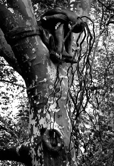 Final_bw_root_head