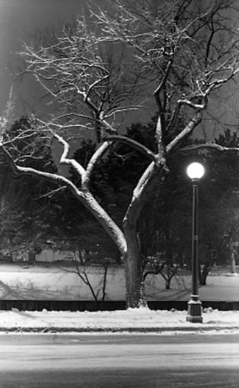 Tree___lamp