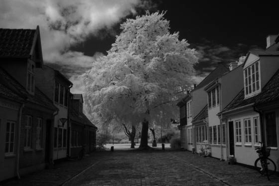 Tree at the end of a street