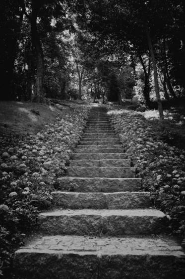 Stairway_in_the_dark_forest-_istanbul_turkey-2012