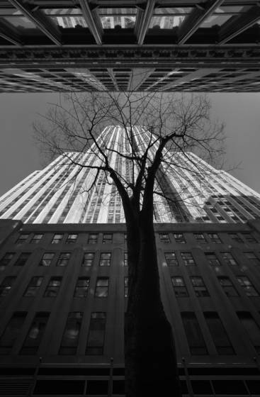 Empire state building and tree