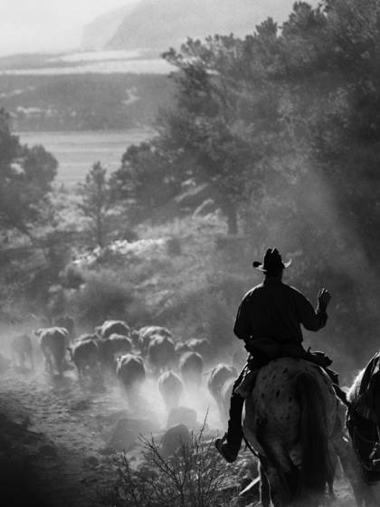 Cattle_drive_32