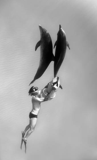 Atlantic_spotted_dolphins
