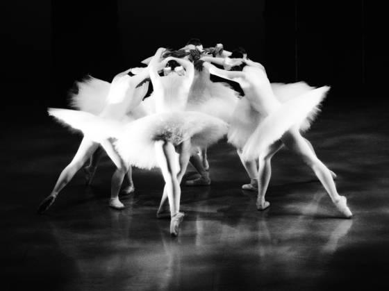 Swan_lake_7
