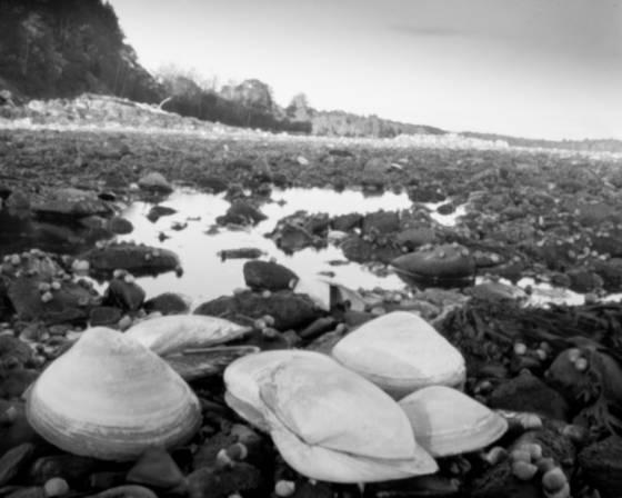 Clam_shells