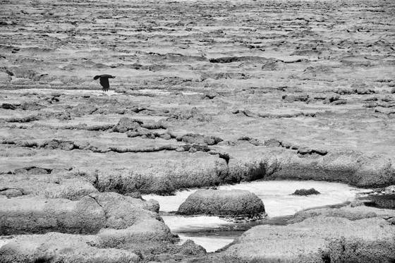 Saltscape withturkey vulture