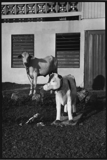 Cow_corner
