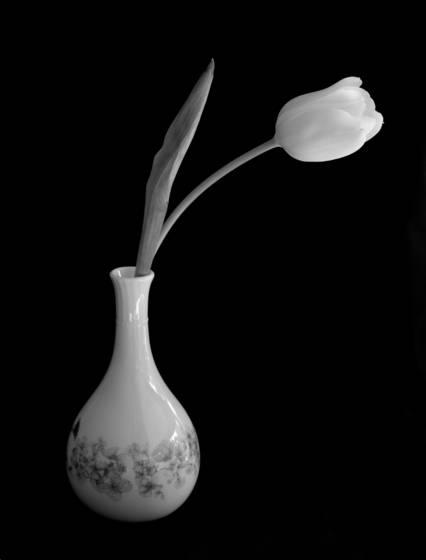 Tulip___vase