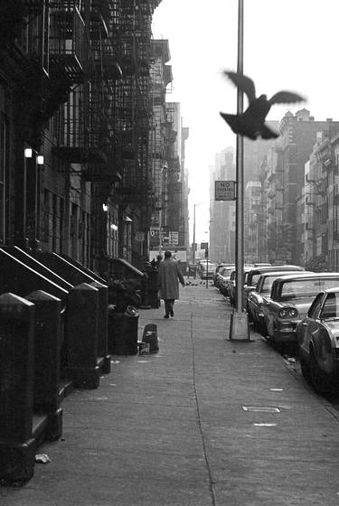 Street scene  with  pigeon