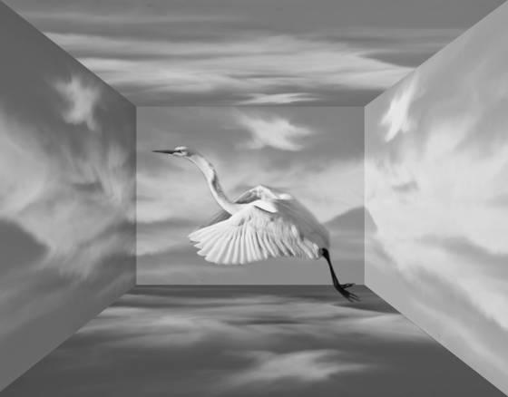 Egret_morning