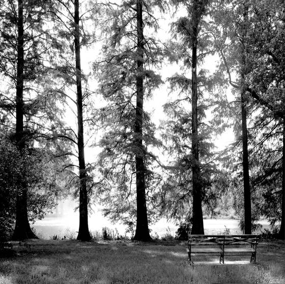 Lakeside_forest_park