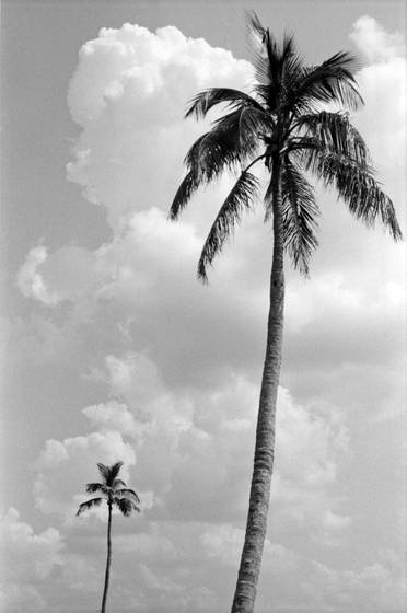 Two_palms