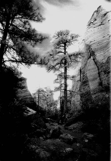 Tree_in_canyon