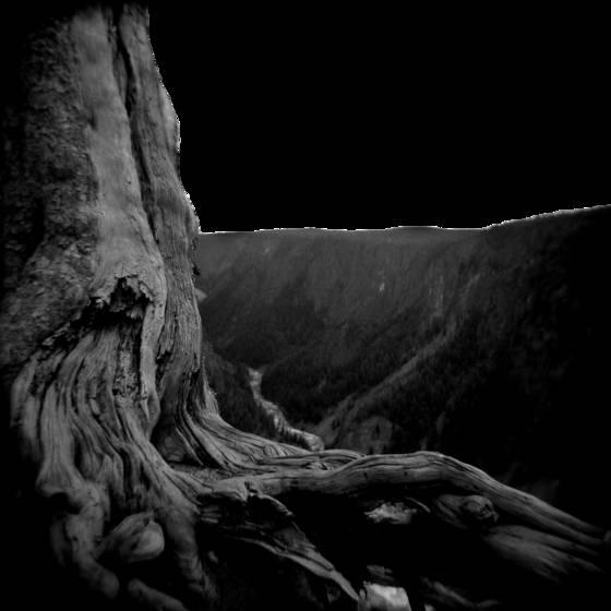 Tree_series__1