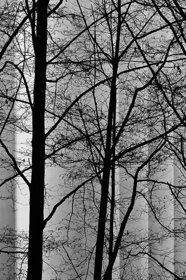 Dark_trees