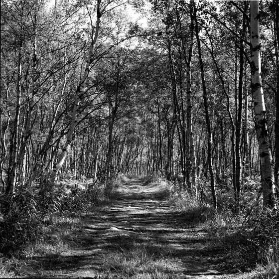 Narvik_woods