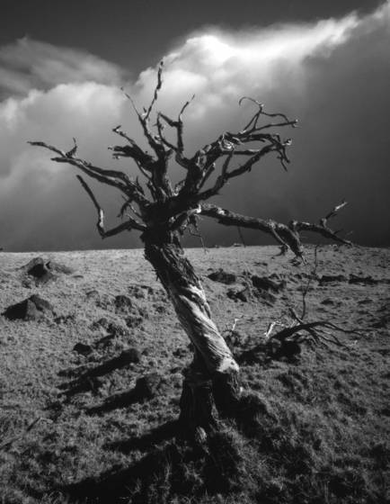 Haunted_tree