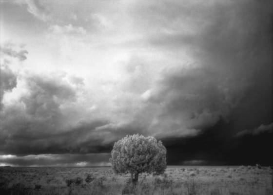 Tree_and_storm