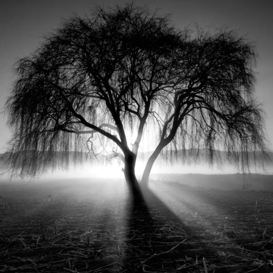 Lighting_tree