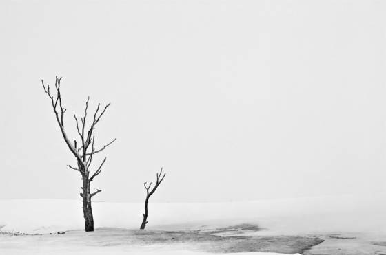 Tree_in_blizzard