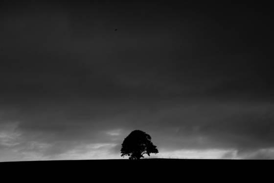 Tree__2