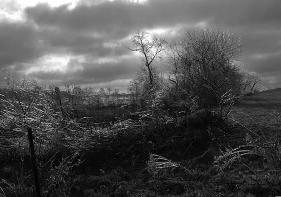Rural_landscape__12