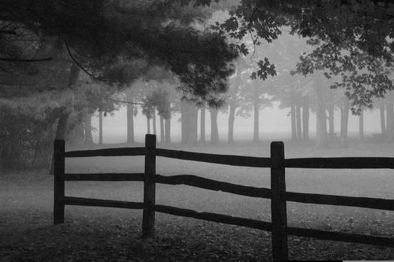 Silent_fog