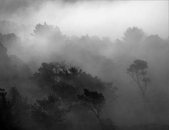 Monterey_mist