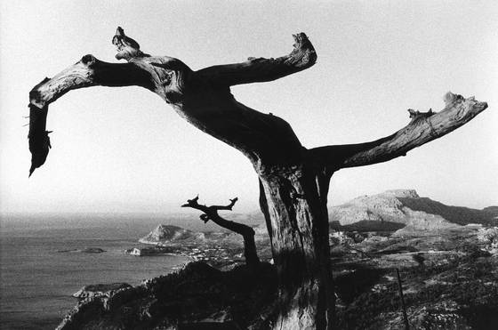 Dancing_trees_of_rhodes