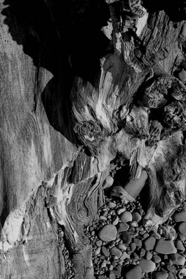 Driftwood_2