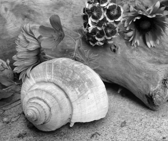 Shell___flowers