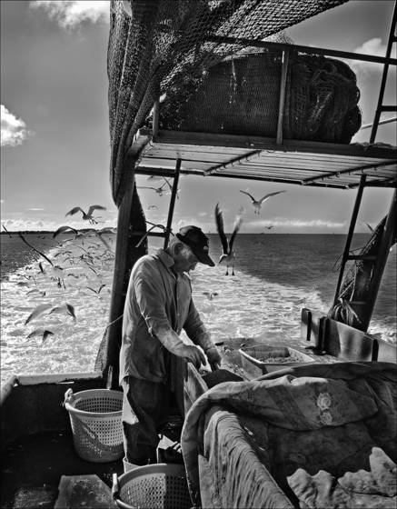 Shrimper_at_sea