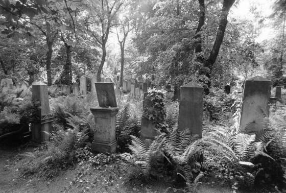 Jewish cemetery in poland