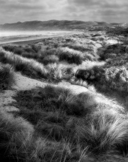 Pismo_dunes
