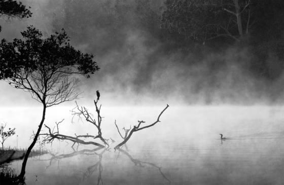 Cormorant_mist