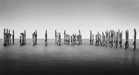 Birds_on_pier_pilings